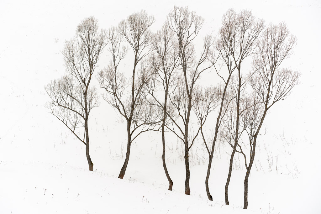 white - snow - romanian photographer- photography and meditation - trees - strip - forms - geometry - landscape photography - creartphoto