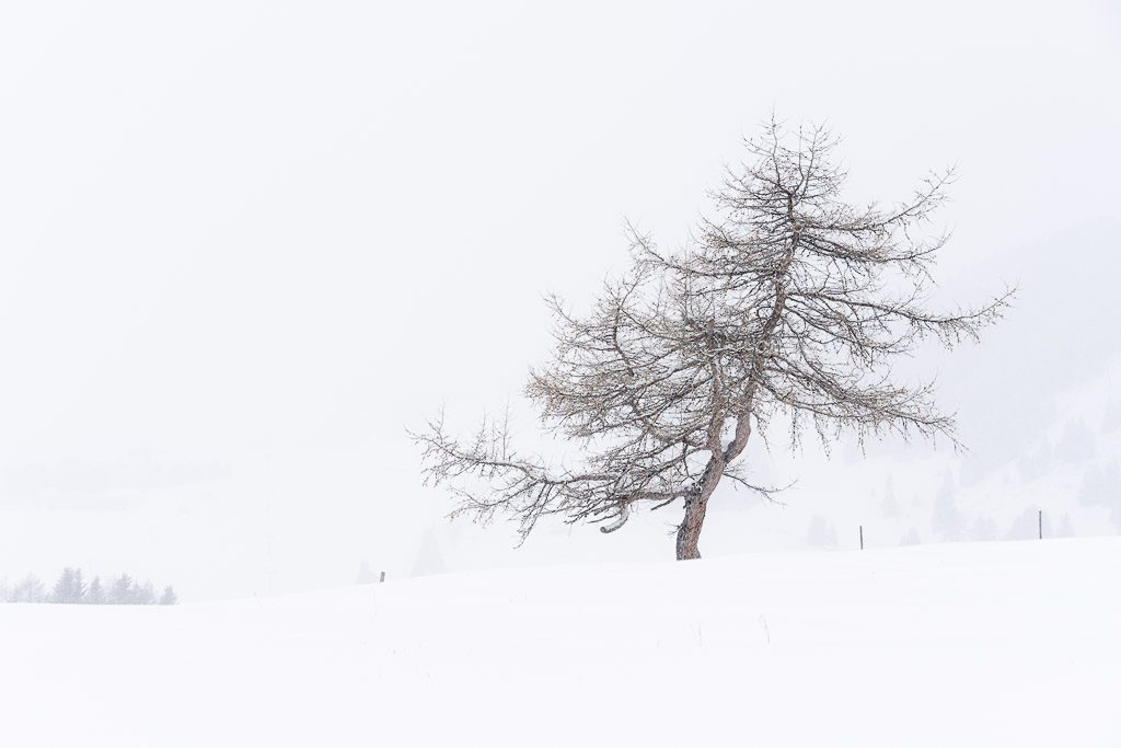 tree - fog - shape - snow - winter - Dolomites - Siser Alm - CreArtPhoto - landscape photography - romanian photographer - creartphoto